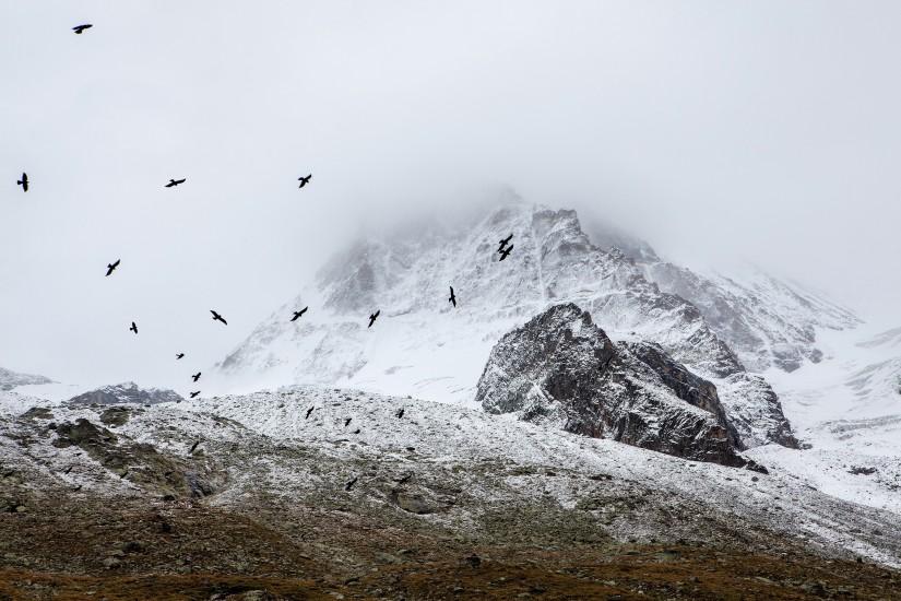 birds-cold-fog-4037-825×550